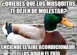 Enlace a Cómo espantar mosquitos en estas épocas