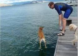 Enlace a Sacando a pasear a este bendito perro