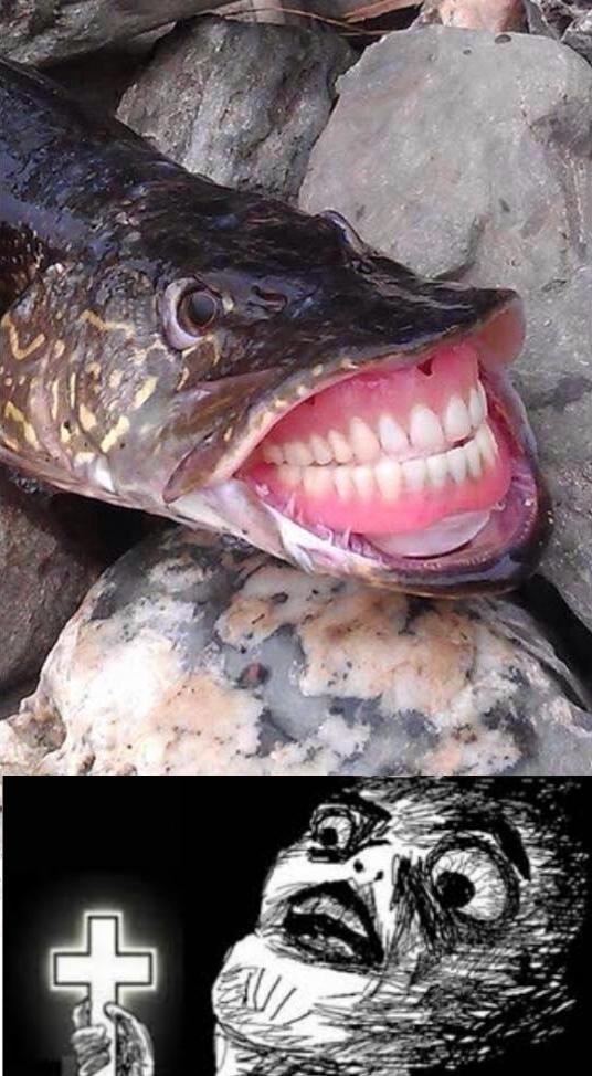 Inglip - El pescado encontró la dentadura de la abuela