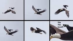Enlace a El domador de águilas