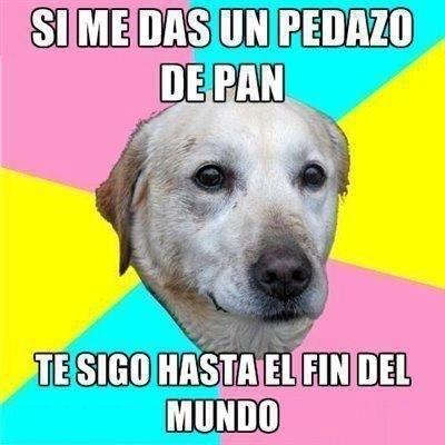 Meme_otros - La lealtad canina al mínimo precio