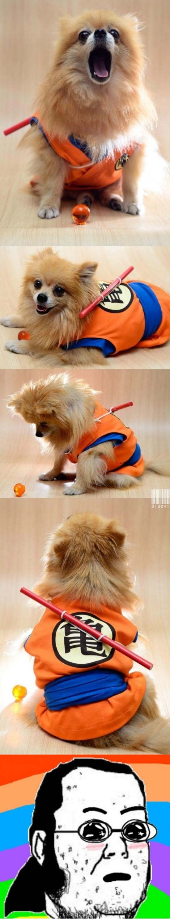 Friki - El perro deseado por cualquier friki