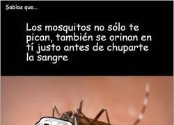 Enlace a Los mosquitos no sólo te pican