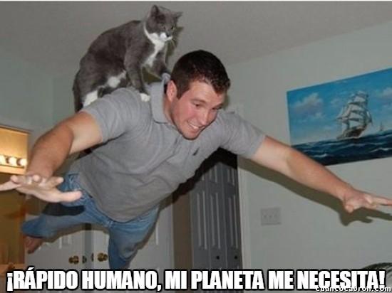 Meme_otros - ¡Supergato y su compañero Superhumano al rescate!
