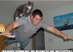 Enlace a ¡Supergato y su compañero Superhumano al rescate!