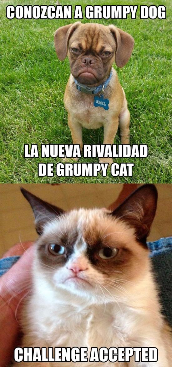 Grumpy_cat - La rivalidad entre perros y gatos va mas allá de lo que imaginamos