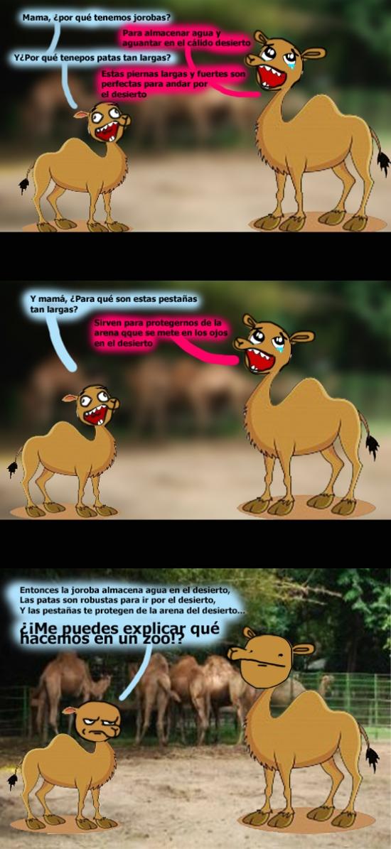 Kidding_me - ¿Seguro que los camellos viven en los desiertos?
