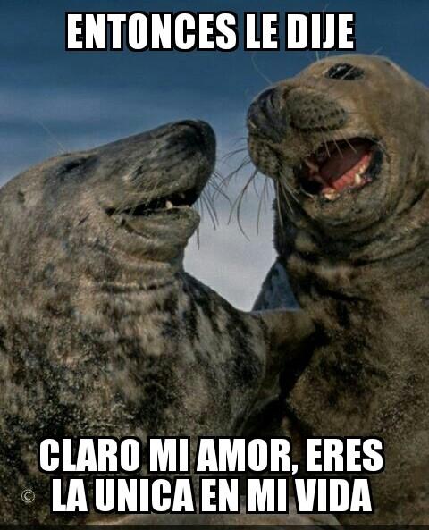Meme_otros - Las focas pueden llegar a ser muy promiscuas