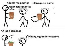 Enlace a El típico que tiene a la abuela cuidando sus plantas