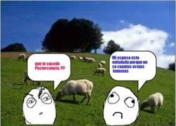 Enlace a La dificultad de gestión para los pastores de ovejas