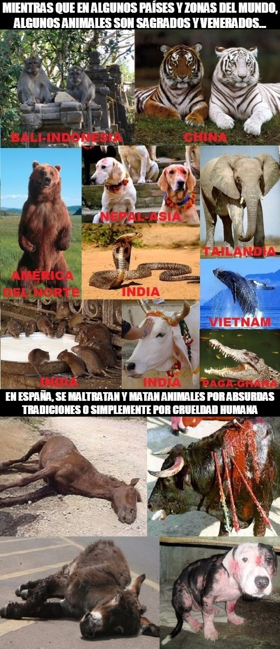 Meme_otros - España tiene mucho que aprender de otras zonas del mundo en cuanto al trato hacia los animales