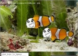 Enlace a Así es la vida de un pez en su acuario