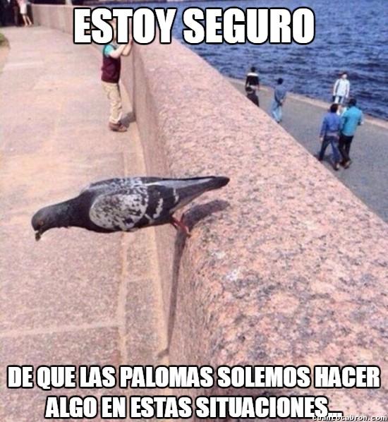Meme_otros - Cuando olvidas como volar súbitamente...