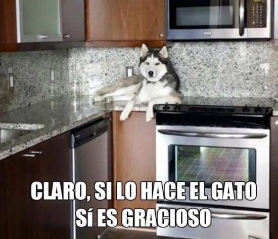 Meme_otros - ¡Es solo gracioso si los gatos lo hacen!