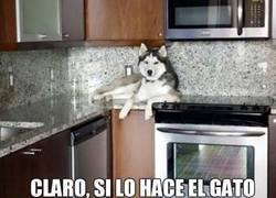 Enlace a ¡Es solo gracioso si los gatos lo hacen!