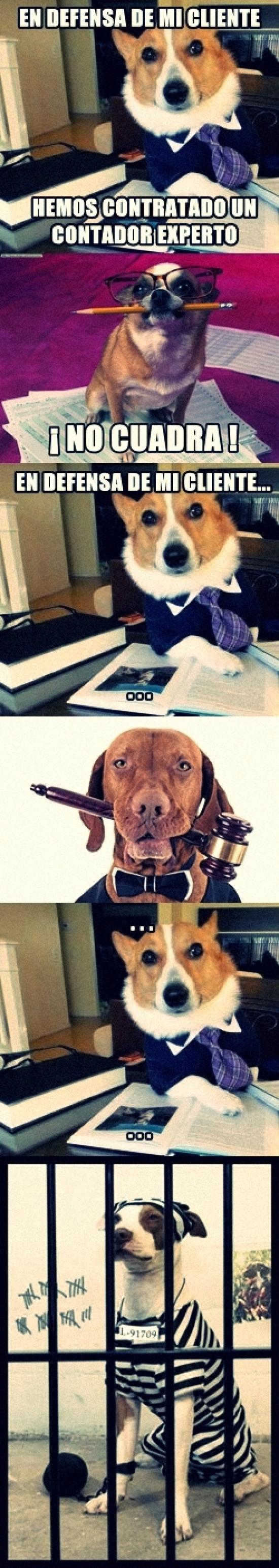 Meme_otros - Juicio canino