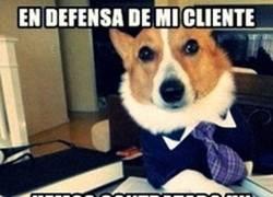 Enlace a Juicio canino