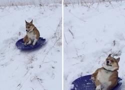 Enlace a Hasta los perros se pueden arrepentir de una mala decisión