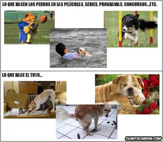 Otros - Qué hacen y cómo son los perros en la pequeña y gran pantalla y qué hace y cómo es el tuyo