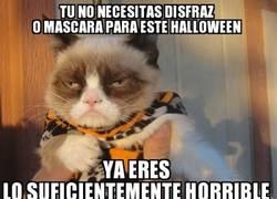 Enlace a Si Grumpy Cat lo dice...