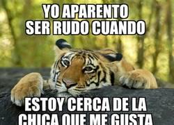Enlace a El oso confesiones presenta a su amigo el tigre