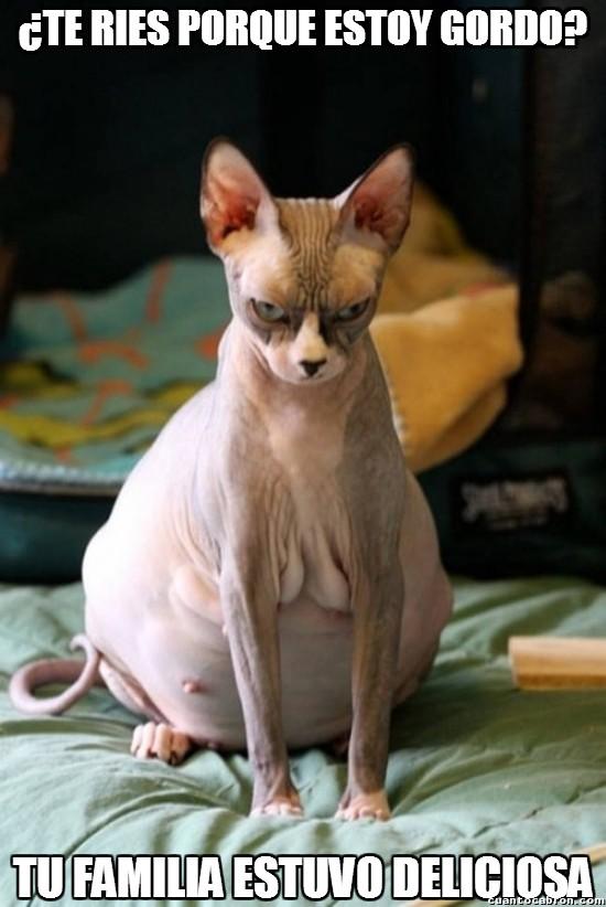 Meme_otros - Nunca te rías de un gato gordo