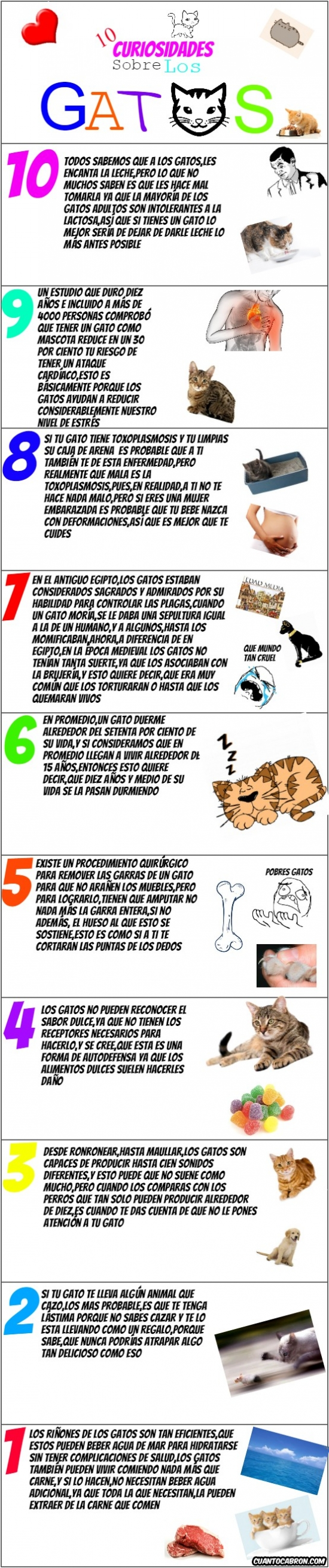 Mix - 10 curiosidades sobre los gatos