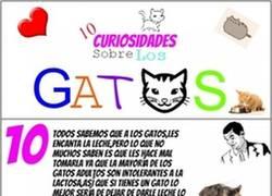 Enlace a 10 curiosidades sobre los gatos