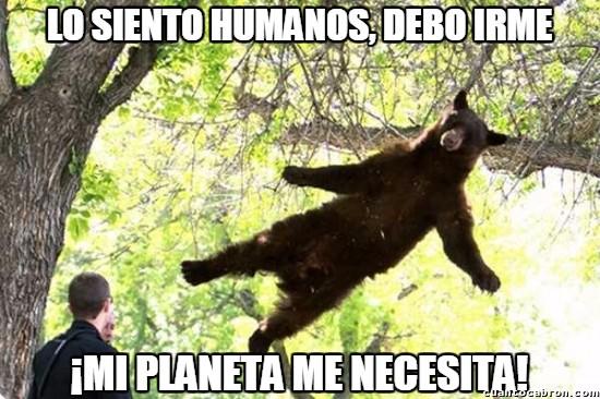 Meme_otros - El misterio del oso volador resuelto...
