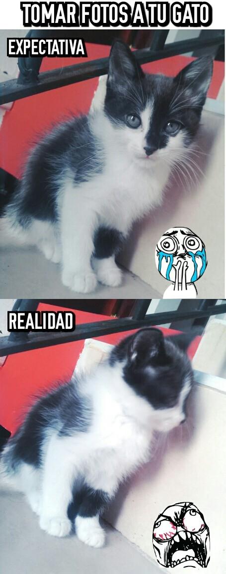 Ffffuuuuuuuuuu - Los gatos son trolls por instinto
