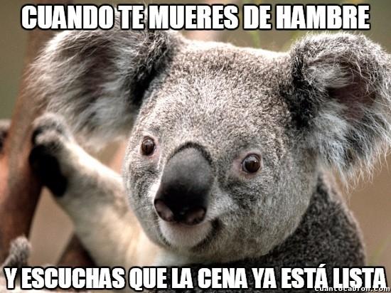 Meme_otros - ''Koala face'' puede tener muchos usos, como por ejemplo este