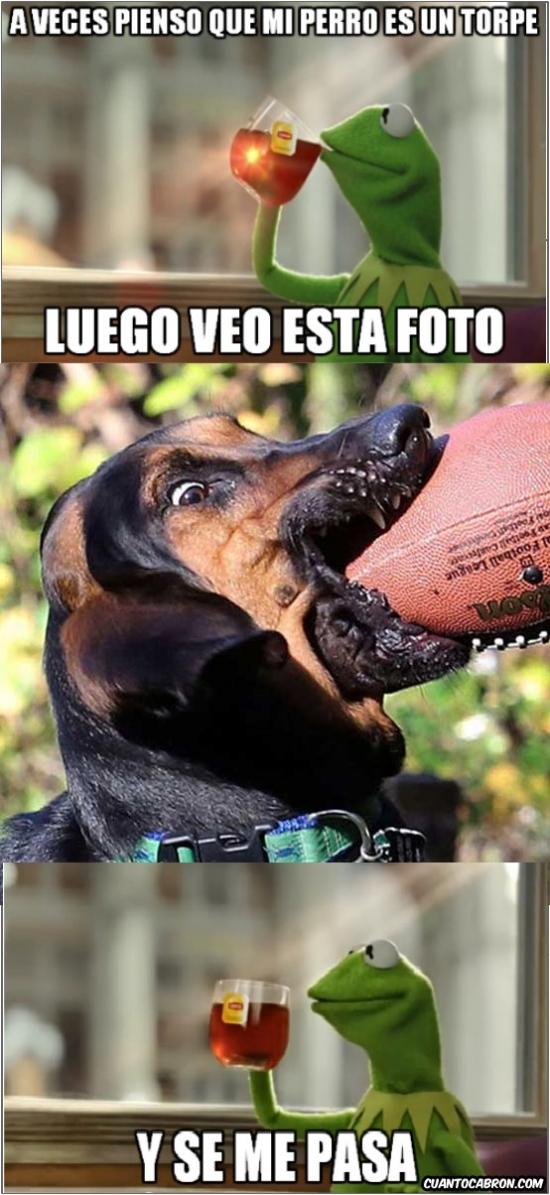 Meme_otros - No te preocupes si tu perro es un torpe como tú...