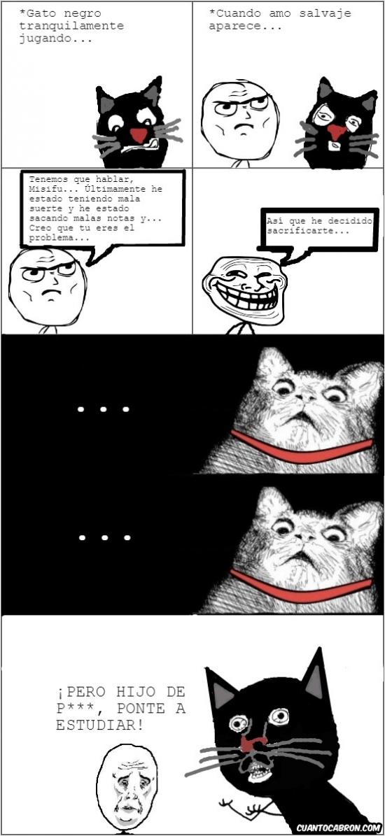 Y_u_no - Claro, el recurso fácil, echarle la culpa al gato