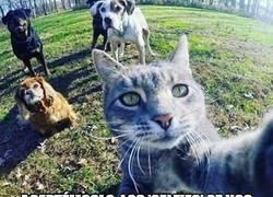 Enlace a Se nos ha ido la olla con eso de los selfies, a todos
