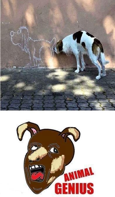 Otros - A veces los animales se pasan de genius