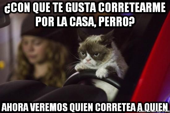 Grumpy_cat - Cuidado, Grumpy Cat va al ataque