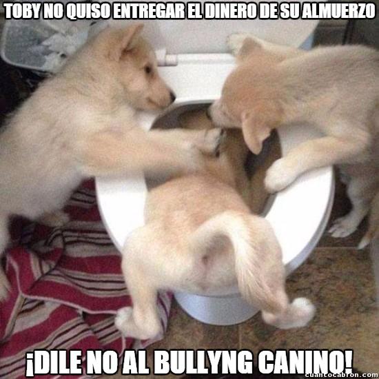 Meme_otros - El bullying no entiende de especies
