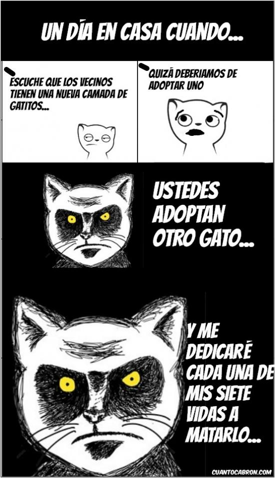 Mirada_fija - Los gatos son bastante territoriales... pero pueden acostumbrarse ¿o no?