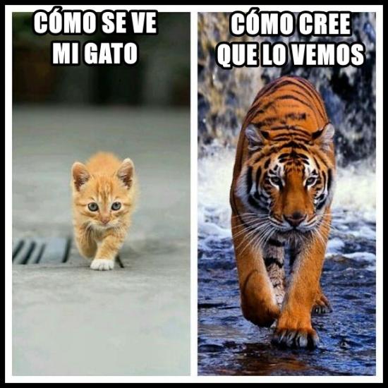 Meme_otros - Los gatos y su ego