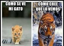 Enlace a Los gatos y su ego