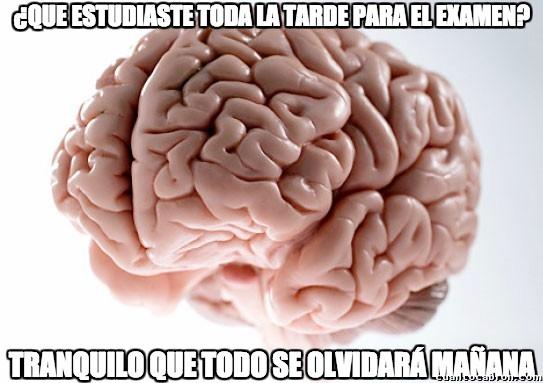 cerebro,estudiantes,examen,olvidar
