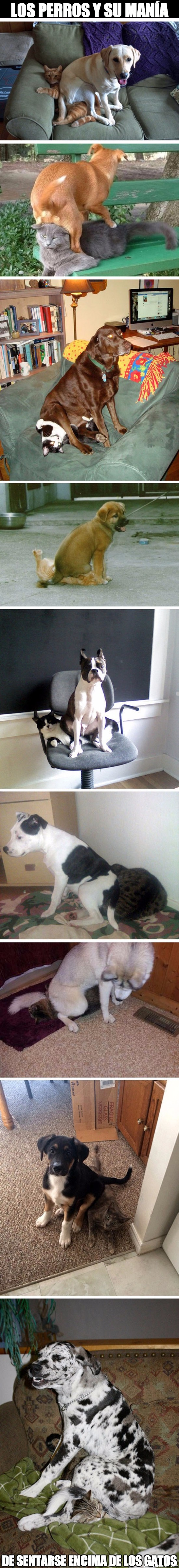 Meme_otros - ¿Alguna vez te habías fijado en esta manía de los perros?