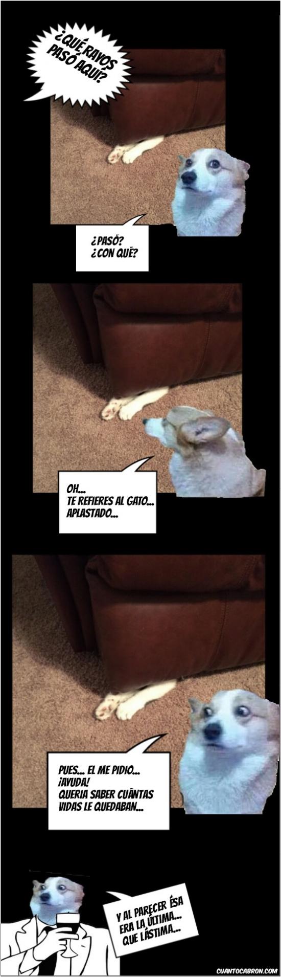 Otros - Así se comprueba las vidas que tiene un gato...