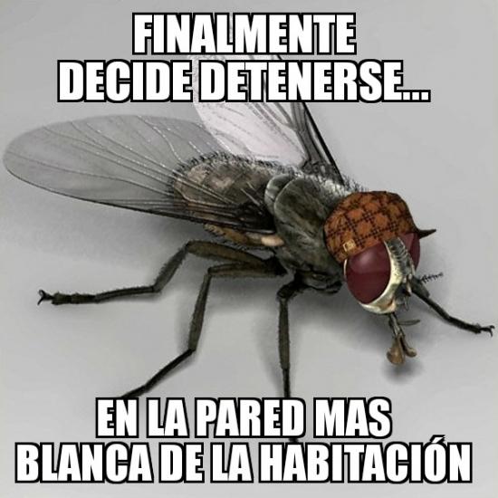 Meme_otros - Es como inmunidad diplomática para una mosca