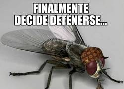 Enlace a Es como inmunidad diplomática para una mosca