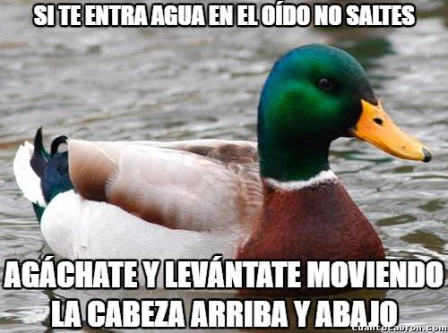 Pato_consejero - Un consejo muy útil
