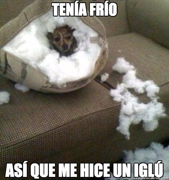 castigo,cojin,frio,iglu,perro