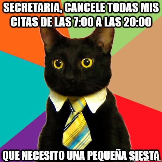 Gato_empresario - Un gato muy ocupado