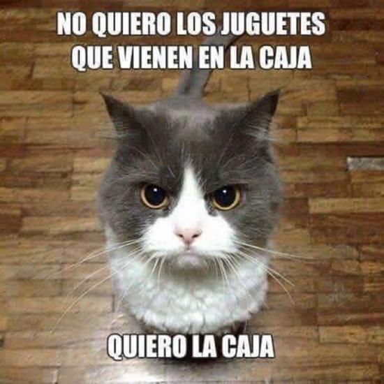 Meme_otros - La lógica felina