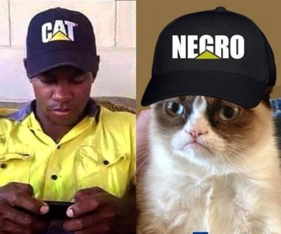 Meme_otros - El Gato más racista del mundo